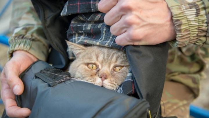 Взрыв, пожар и высота: истории спасения волгоградских котиков из цепких лап смерти