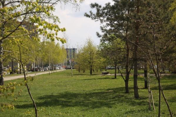 Деревья пересадят в другую часть парка<br>