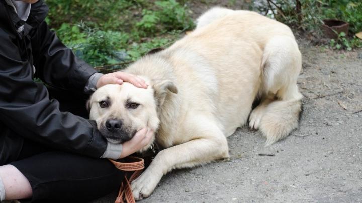 Неделя, чтобы их спасти: в Екатеринбурге выпустят на улицу 43 бездомныесобаки