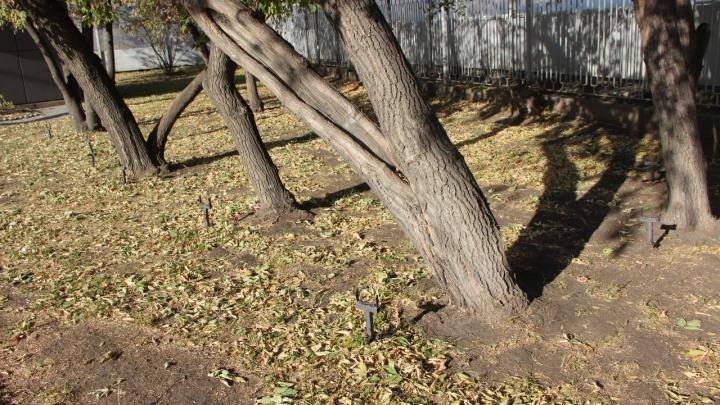 Вандалы украли подсветку деревьев на Мечникова