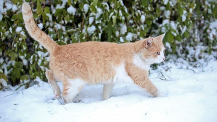 Синоптики Башгидрометцентра рассказали, ждать ли снега в выходные