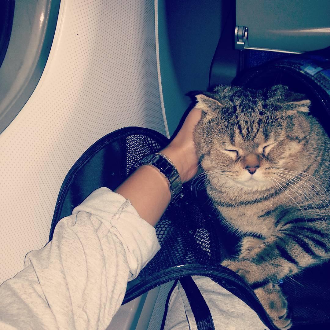Хозяйка этого милого Френки заранее предупредила авиакомпанию, что полетит с котом. Но так, судя по количеству обращений в кол-центр, поступают далеко не все пассажиры
