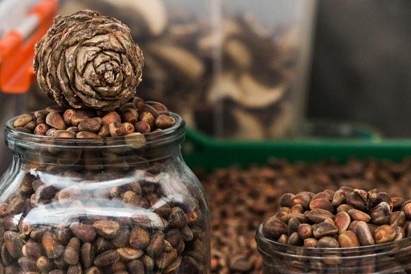 Собирать кедровые орехи можно будет с 26 августа
