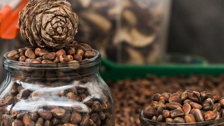 Идите в лес: новосибирцам разрешили собирать кедровые орехи