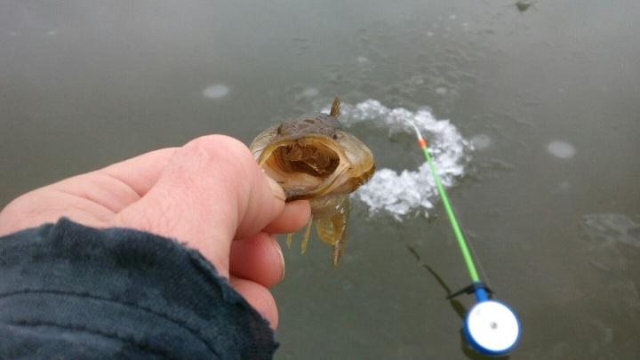 Омские рыбаки начали выходить на пятисантиметровый лёд