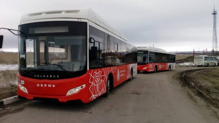 В Пермь привезли первые три новых автобуса Volgabus для муниципального парка