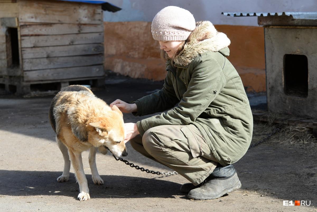 Тяжелая жизнь не озлобила собаку, она очень ласковая и спокойная