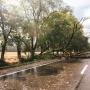 Убирайте машины: в Самарской области объявили экстренное предупреждение из-за сильного ветра
