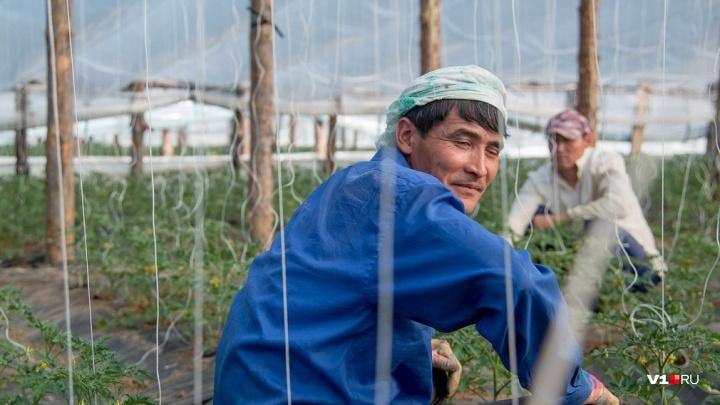 Полиция и ФСБ нагрянули на огуречные плантации под Волгоградом