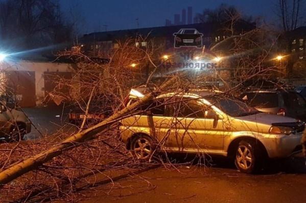 Последние сильные ветра в Красноярске валили деревья и заборы на улицах