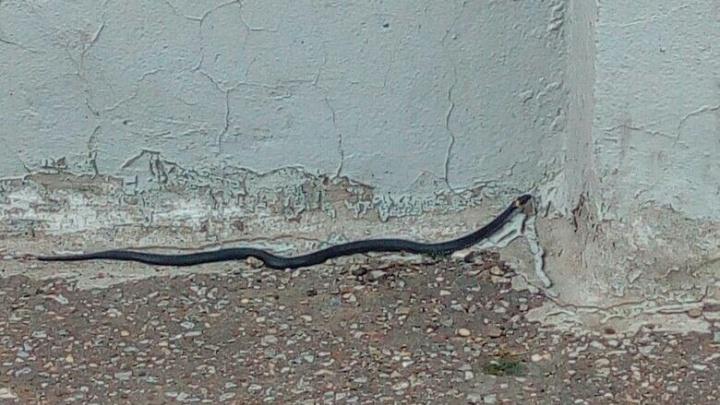 Уфимцев напугали змеи в черте города