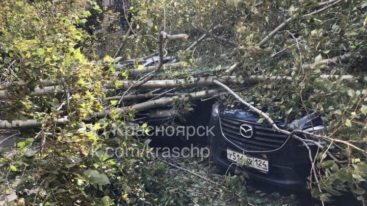 Повалившееся дерево на Кутузова покалечило несколько машин на парковке