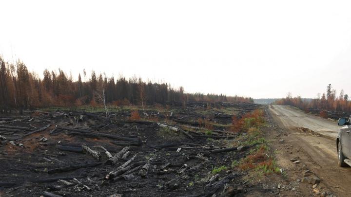 Лесные пожары на севере Красноярского края начали тушить с самолетов МЧС