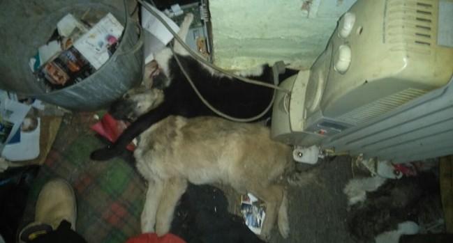 На владелицу передержки на Уктусской, где нашли 18 трупов кошек и собак, завели уголовное дело