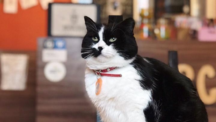 Известное новосибирское кафе с котиками объявило о закрытии