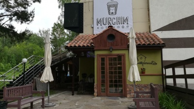 Тринадцать котиков поселились в новом кафе Академгородка