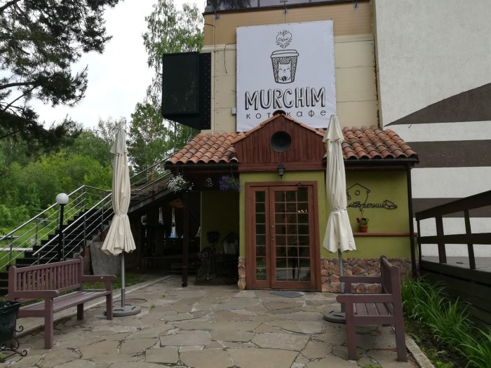 Второе в Новосибирске котокафе открылось на ул. Терешковой в Академгородке