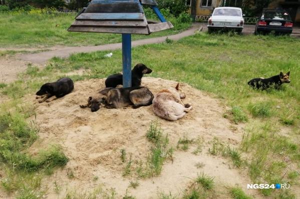 Во дворе жильцы замечают 5–7 бродячих собак, которые, по их словам, могут накинуться на детей