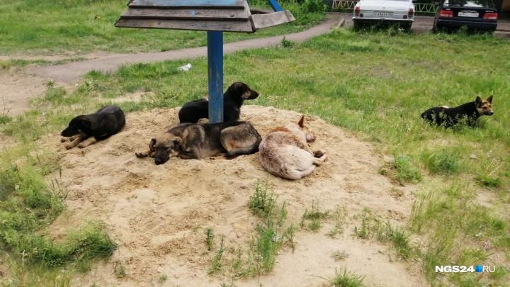 Бродячие псы держат в страхе жильцов домов на Аэровокзальной