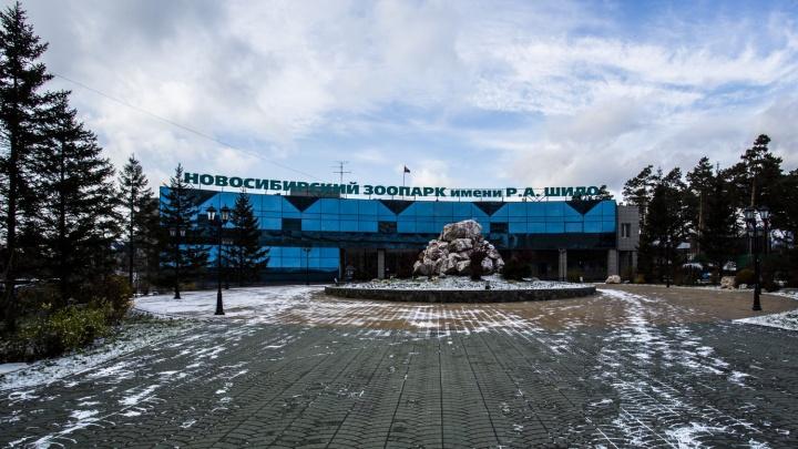 Весна пришла: Новосибирский зоопарк изменил график работы