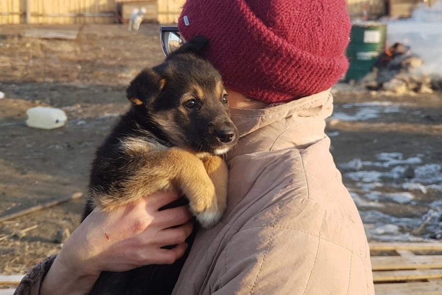 В приюте 15 кошек и 7 собак мечтают о добрых руках и новом доме