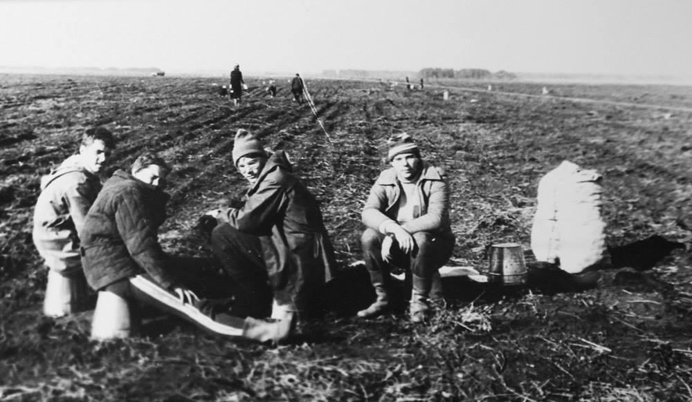 Сельхозработы студентов машиностроительного факультета и преподавателей НЭТИ в совхозе «Ярково». Сентябрь 1985 года