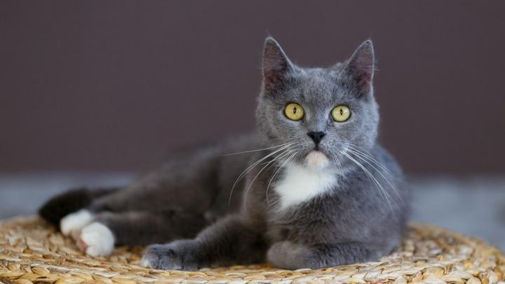 Приют для кошек «Матроскин» откроет в Перми котокафе