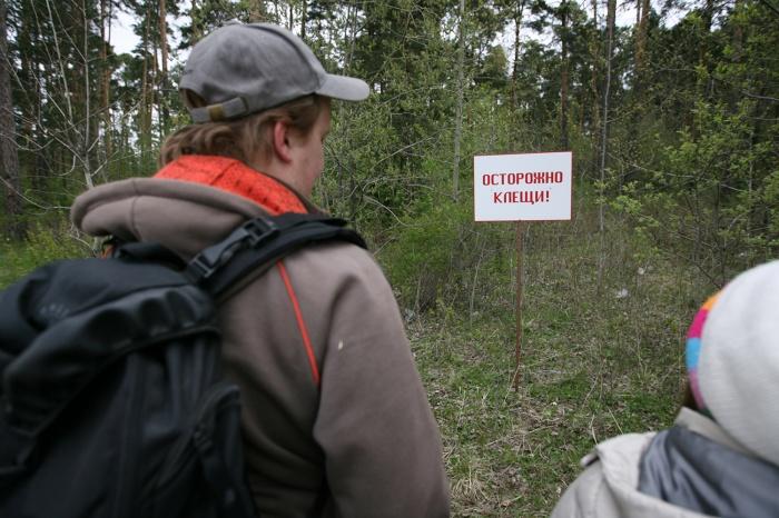 За последнюю неделю клещи покусали1291 жителя Новосибирской области