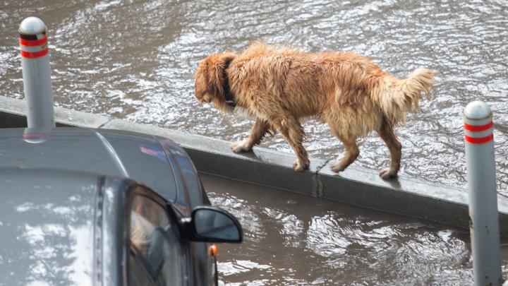 Ливнёвки опять не прочистились: скоротечный дождь затопил центр Челябинска