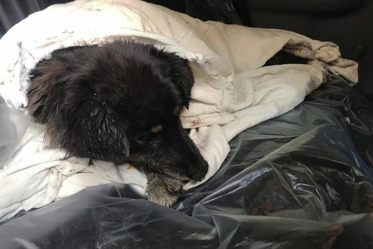 Пострадавшую собаку назвали Бейби