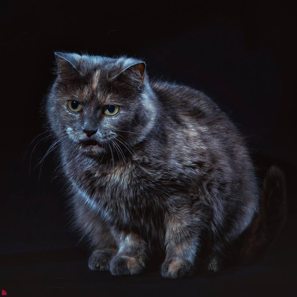 Эту кошку зовут Джетта