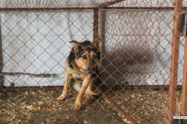 В прошлом году ловцы собак стерилизовали и отпустили несколько сотен бездомных животных
