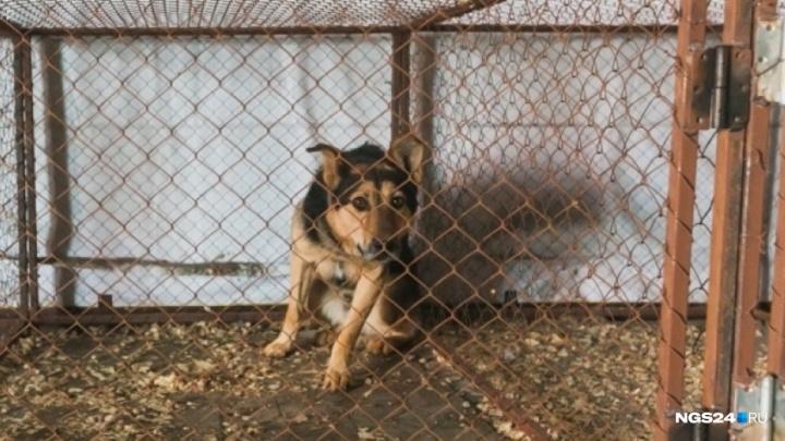 Школы и садики Красноярска предложено оснастить отпугивателями собак за 100 тысяч