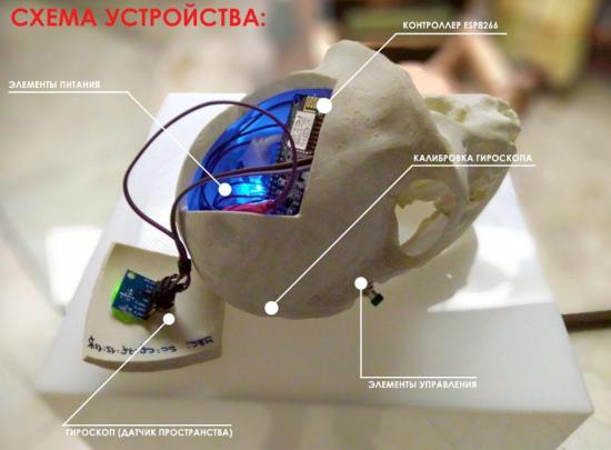 Пермский математик собрал интерактивный череп обезьяны бонобо