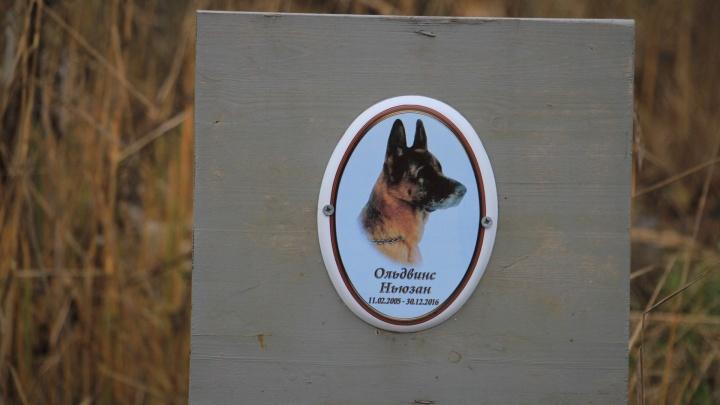 Память вне закона: как выглядит стихийное кладбище домашних животных в Архангельске