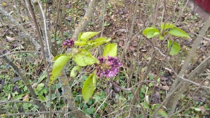 В Ярославской области распустились весенние цветы: что происходит с погодой в регионе