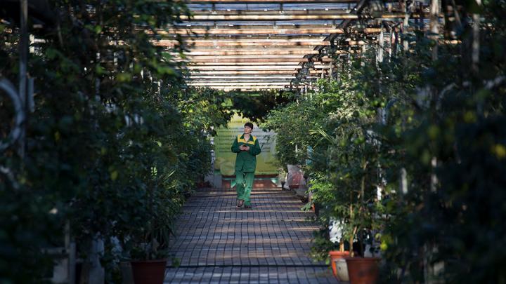 В Уфе появится ботанический сад