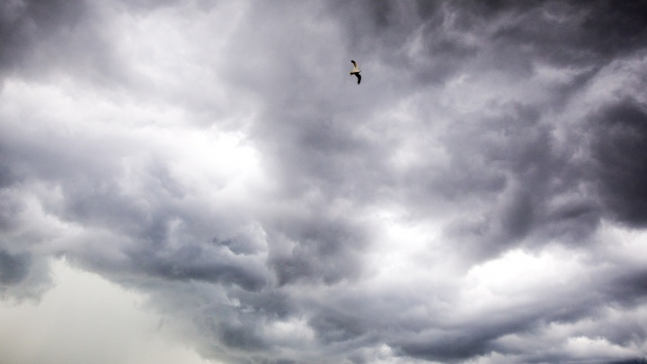 С юга придут фронтальные разделы: какая погода ожидает ярославцев на этой неделе