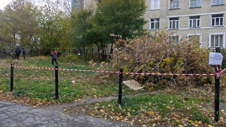 Ни дня без вырубки: у дома в тихом центре спилили деревья