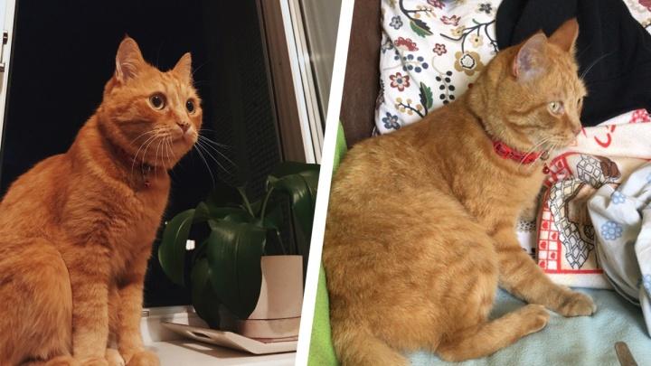 Семья из Академгородка выпустила кота погулять: через сутки его нашли расчленённым в мусорном баке