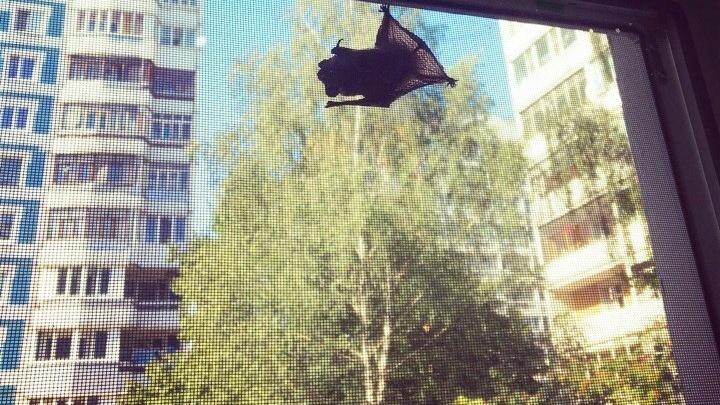 Ярославцев атаковали летучие мыши: почему они прилетели в город