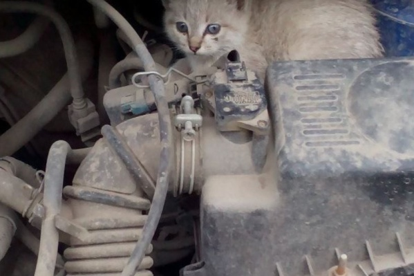 Вытащить из-под капота котёнка может далеко не каждый — лучше позвонить спасателям