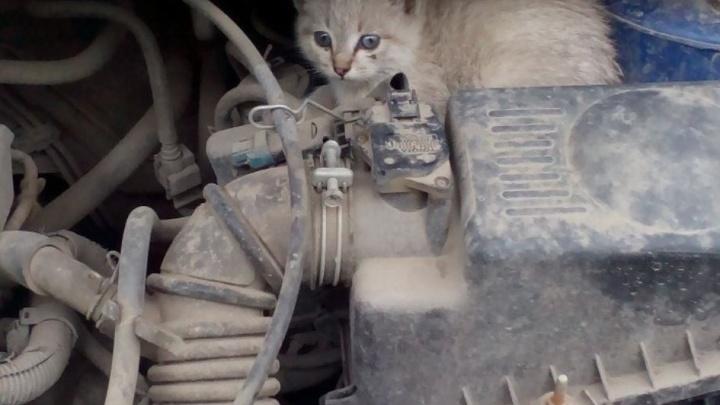 Котята под капотом: спасатели попросили новосибирцев искать в машинах животных
