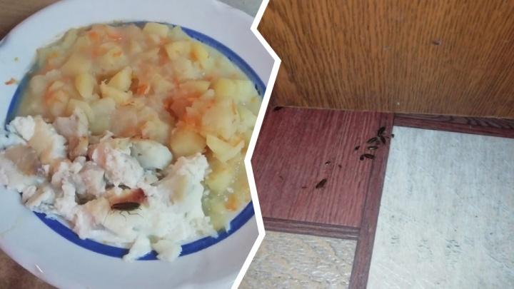 «Ходят по лежачим, тарелкам и матрасам»: в Ярославле депутата шокировали тараканы в больнице