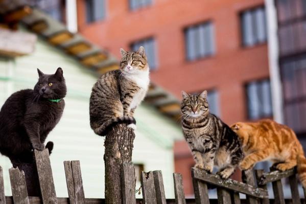 Котики — те еще предсказатели погоды. Следите за ними внимательно