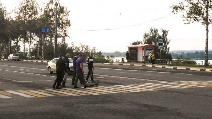 Ярославцы помогли маме-утке с утятами перейти дорогу: фото