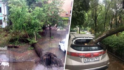Упавшие деревья и рухнувший потолок: последствия весеннего ливня в Ростове