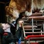 «Секрет успеха — любовь к животным»: Виталий Смолянец рассказал о пушистых артистах цирка