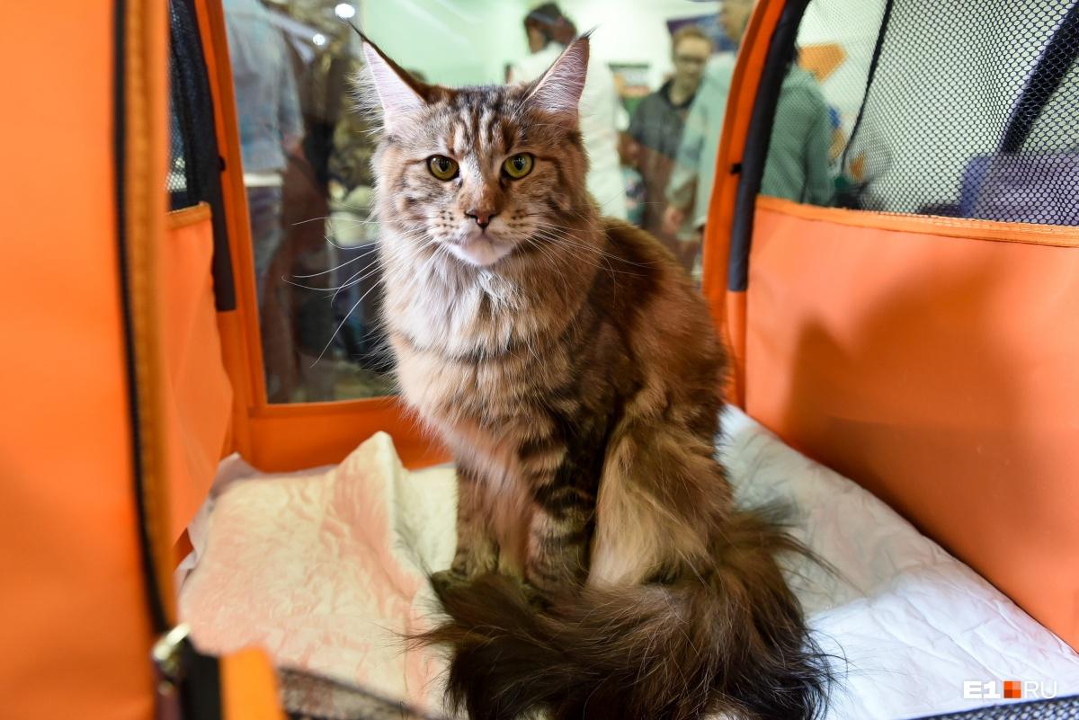 Посмотрите, какой серьёзный и гордый котейка!