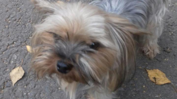 «Смотрел на лапки и жалко было»: ярославца, который спасал собаку, обвинили в грабеже